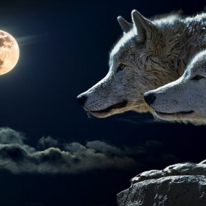 Wolf symbolism meaning in norse mythology?