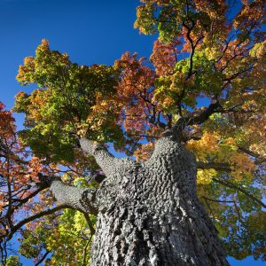 World tree/Yggdrasil meaning in norse mythology