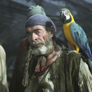 Why Does A Pirate Have A Parrot?